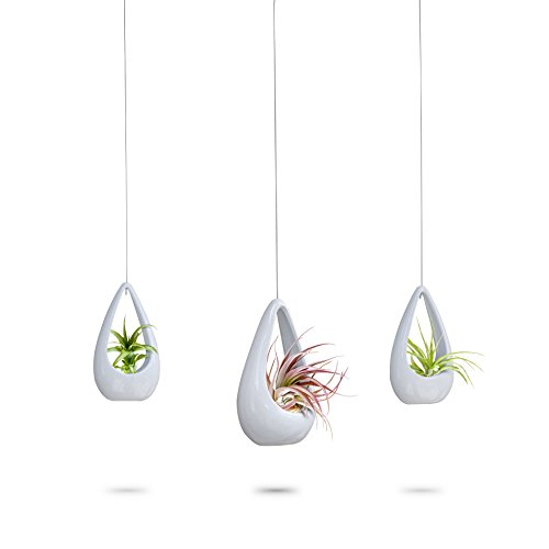 Hanging Planters for Air Plants