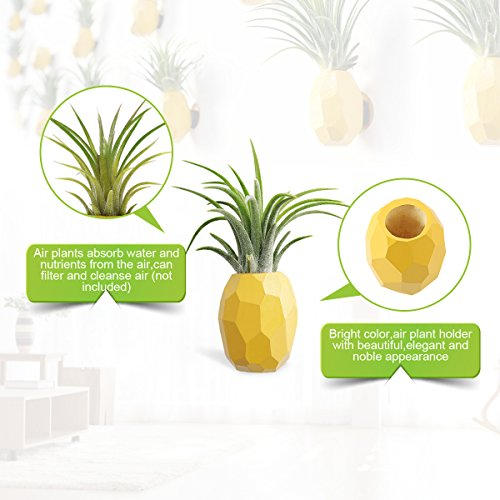 Pineapple Shaped Air Plant Holder