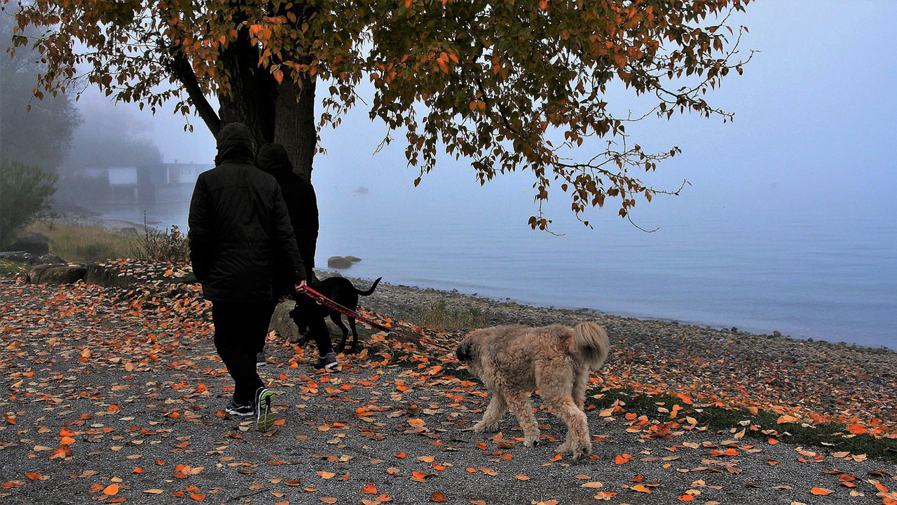 Dog walking to a healthier you
